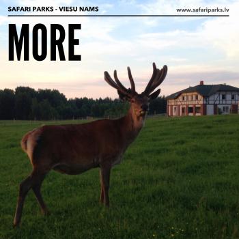 safari parks - viesu nams MORE